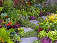 Colourful Flower And Vegatable Garden With Selection Of Plants And Vegetables