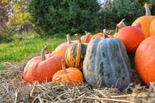 Pumpkins Harvest On Straw