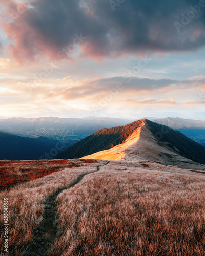 Fotobehang Diepbruine View of the grassy hills with path in Carpathian mountains glowing by evening sunlight. Dramatic spring scene
