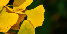 Close-up Of The Small Yellow L...