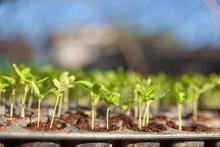 Vegetable Plant On Blurred Bac...