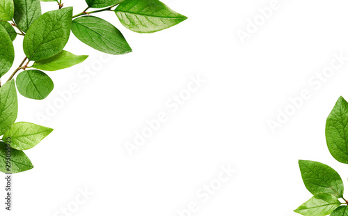 Obraz Corners with green leaves - fototapety do salonu