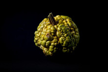 Isolated Green Decorative Warty Pumpkin On Black Background