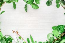 観葉植物と木目のフレ...