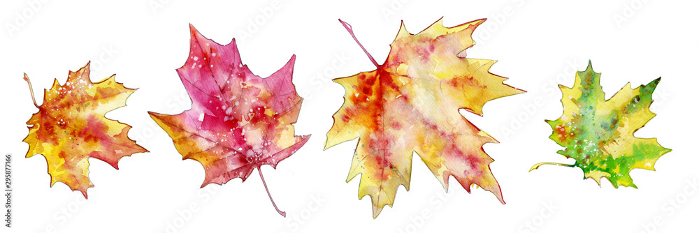 Fototapety, obrazy: autumn maple leaves, set of elements for design, watercolor illustration.