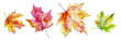 autumn maple leaves, set of elements for design, watercolor illustration.