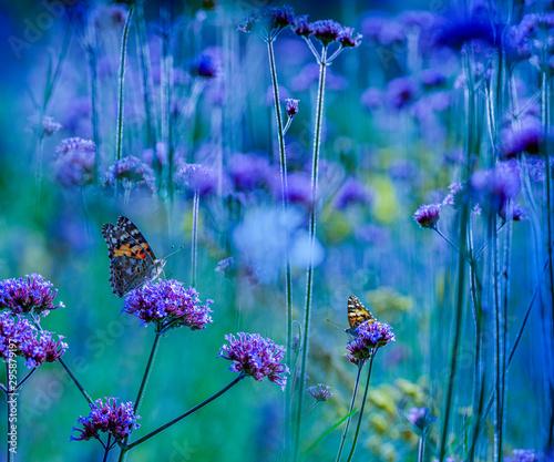 Papiers peints Jardin the garden with flowers and butterflies