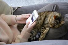 Sleepy Satisfied Tabby Cat On ...