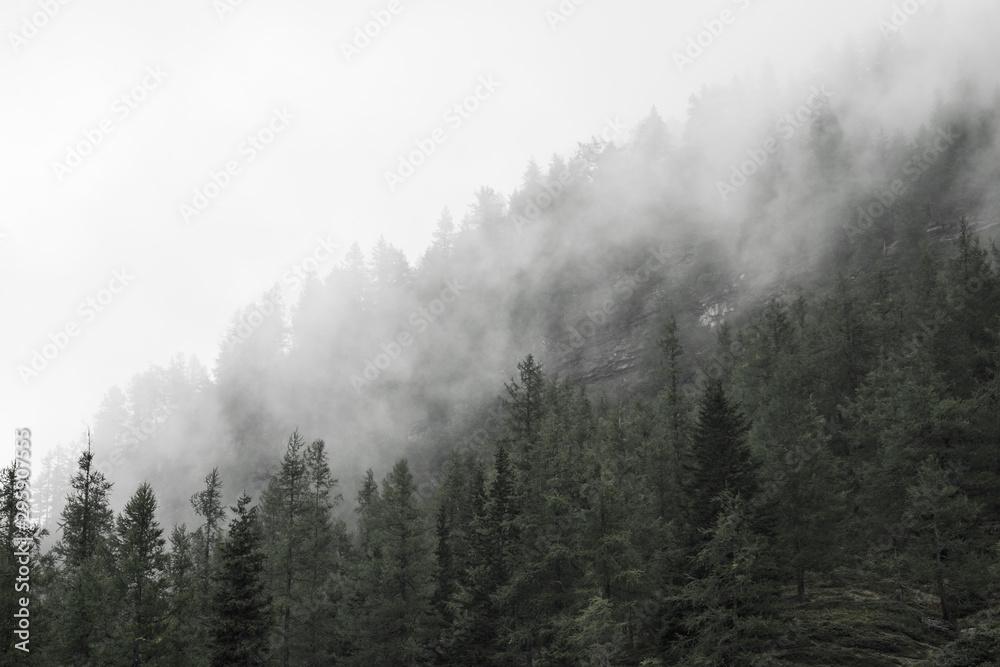 Fototapety, obrazy: fog in the forest