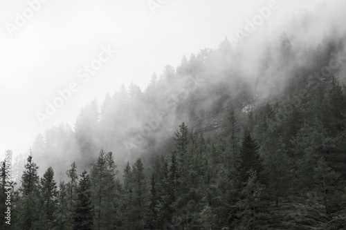 Foto op Canvas Grijze traf. fog in the forest