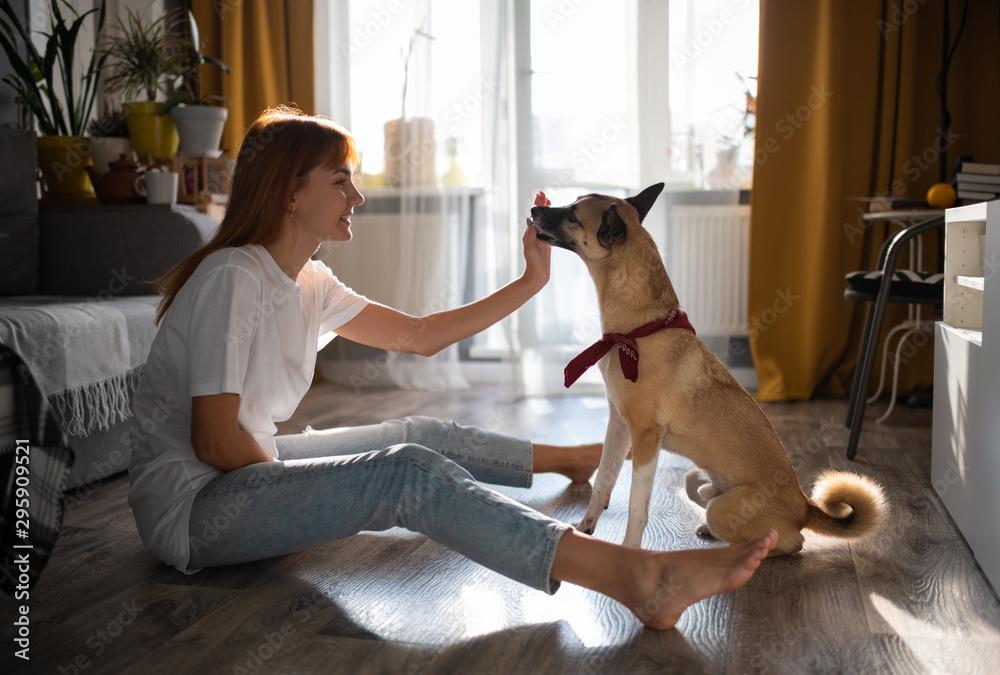 Fototapeta Smiling woman rewarding dog for trick
