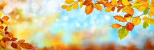 Colorful Autumn Background In ...