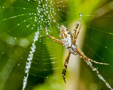 Silver Spider On The Web With ...