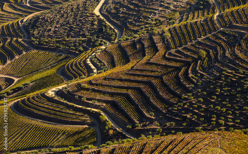 Foto auf Gartenposter Reisfelder UNESCO World Heritage, the beautiful endless lines of Douro Valley Vineyards, in Sao Joao da Pesqueira, Viseu, Portugal.