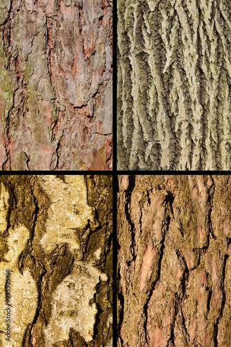 kora różnych drzew