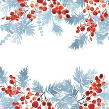 Watercolor Christmas Arranging Of Spruce In Blue And Red Holly Berries