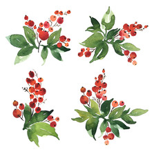 Christmas Watercolor Set Of Bouquet Arrangings. Holly Berries With Green Leaves