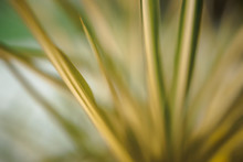 Abstract Picture Of Grass