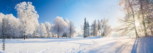 Obraz Panorama of beautiful winter park - fototapety do salonu