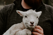 Happy Lamb In Arms Of Farmer