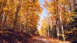 Sightseeing road trip, driving down sunny country road in Autumn, amazing Fall colors, cool breeze, leaves falling.