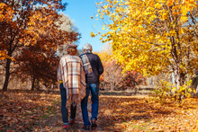 Fall Activities. Senior Couple Walking In Autumn Park. Middle-aged Man And Woman Hugging And Chilling Outdoors