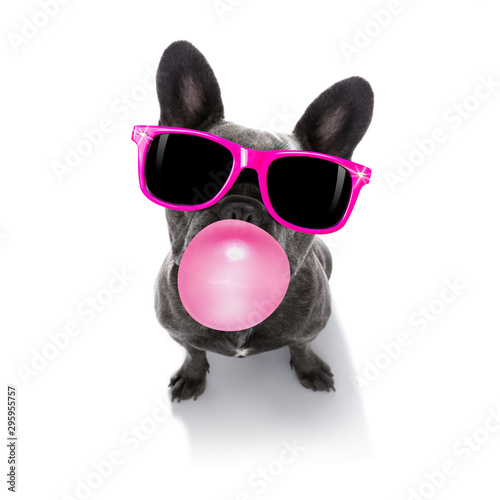 Tuinposter Crazy dog dog chewing bubble gum