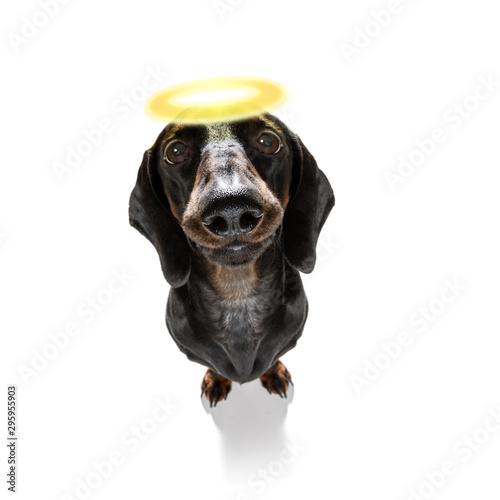 Foto op Aluminium Crazy dog angel saint dog with halo