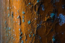 Closeup Of A Brown Wall With Spots Of Blue Mold Growing On It