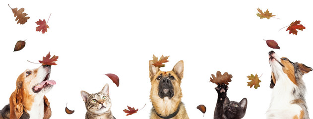 FototapetaDogs and Cats With Falling Autumn Leaves
