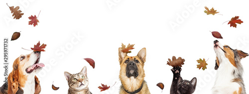 Dogs and Cats With Falling Autumn Leaves Wallpaper Mural