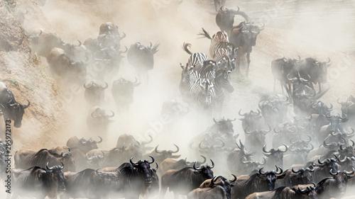 Obraz Dzikie stado dzikiej przyrody - fototapety do salonu