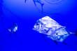 canvas print picture - Schooling diamond trevally fish