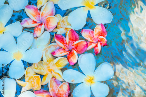 Wall Murals Plumeria Frangipani flowers colorful tropical scent on water treatment in the health spa is illustrated
