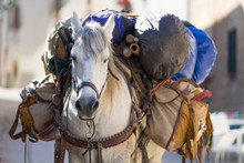 Heavily Loaded Horseback