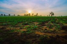 Green Grass And Orange Sunshin...