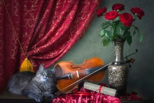 Still Life With Violin And Adorable Kitty