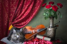Still Life With Violin And Adorable Cat