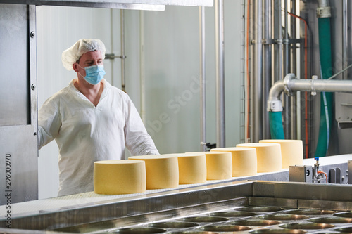 Obraz Dairy factory. worker at cheese food production conveyer - fototapety do salonu