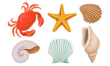 Different Bright Tropical Shells And Corals Vector Illustrations Set