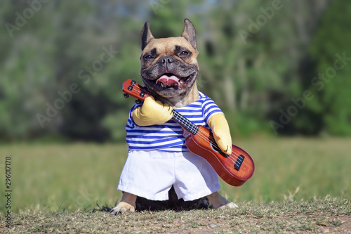 Funny laughing French Bulldog dog dressed up as musician wearing a costume with Fototapeta