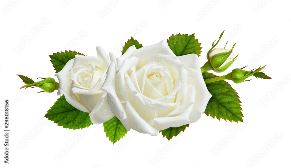 Fototapety, obrazy: Rose flowers in a floral arrangement