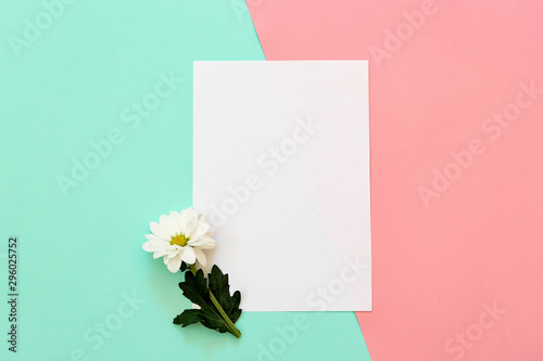 Fotomural  White chrysanthemum with copy space on a mint and pink background