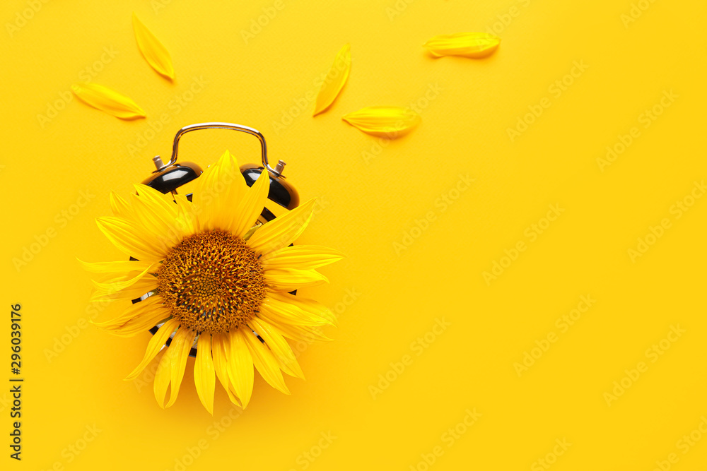Fototapety, obrazy: Sunflower with alarm clock on color background