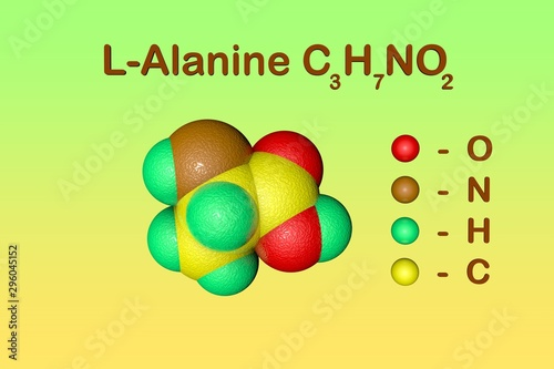 Photo Structural chemical formula and space-filling molecular model of l-alanine or alanine, an amino acid used in the biosynthesis of proteins