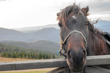 Portrait Of Horse On Mountain ...