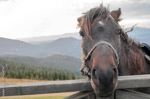 Foto auf Gartenposter Pferde Portrait of horse on mountain farm behind wooden fence