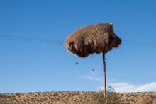 Social Weaver Nest On A Teleph...
