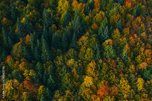 Aerial view of autumn tree tops.