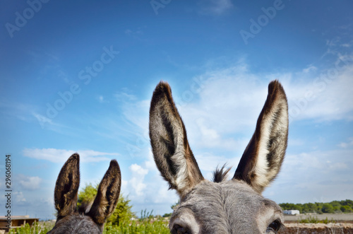 Photo Two donkeys close to a wall in a farm in Formentera Island in a sunny day